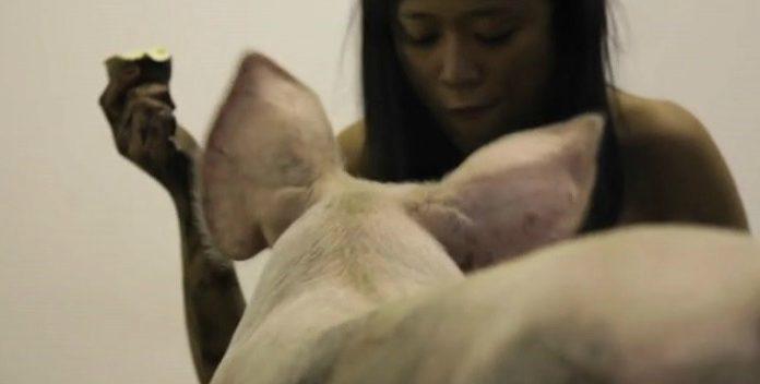 Miru Kim: porcos, ratos, ocupações e explorações urbanas