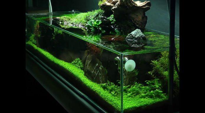 paisagismo aquático