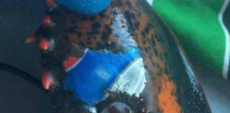 Acharam uma lagosta com o símbolo da Pepsi tatuado (!)