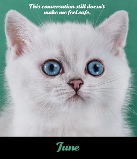 Tem um calendário 2018 com fotos de gatinhos guerreiros de justiça social