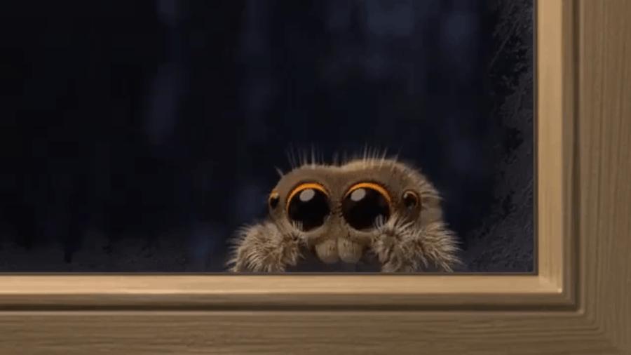 Nossa, que aranha fofinha! - 2
