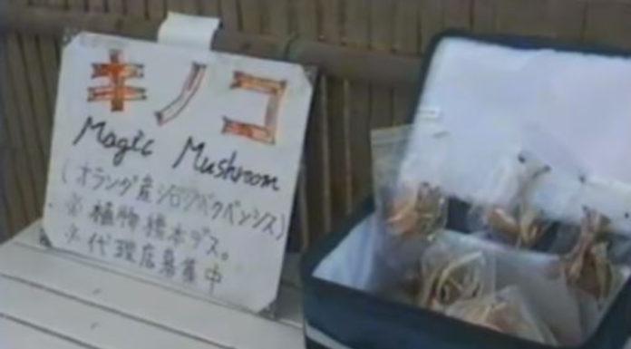 Aquela época em que se comprava cogumelos psicodélicos nas ruas do Japão