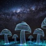 Light painting: cogumelos virtuais no seu quintal
