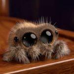 Nossa, que aranha fofinha!