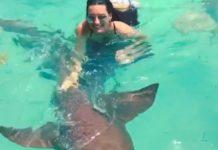 Nadando com tubarões nas Bahamas