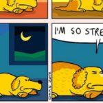 Coco, o cachorro mais pessimista do mundo