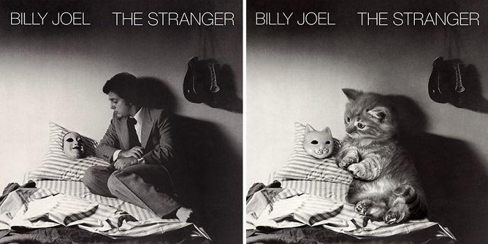 """Fotos de gatinhos """"interpretando"""" capas de discos do pop-rock"""