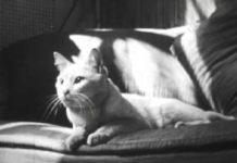 Maya Deren e o dia a dia de um gato, num filme de 1944