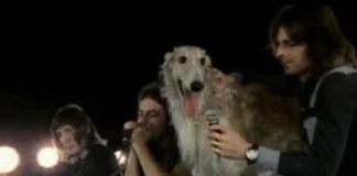Seamus: quando o Pink Floyd teve um cachorro como vocalista